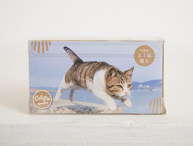飛び猫キャンディ
