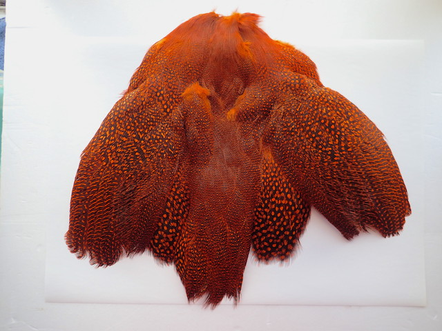 【OUTLET】Guinea Fowl Complete Skin / ギニアフォール COMP. スキン ORANGE