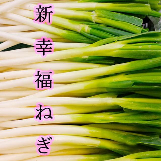 【 白ネギ ・ 長ネギ 】 新幸福ねぎ 5kg (約40本入)
