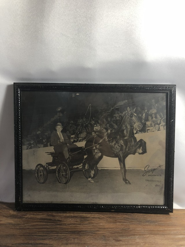VINTAGE PHOTO【RIDING HORSE】乗馬 old antique AC080