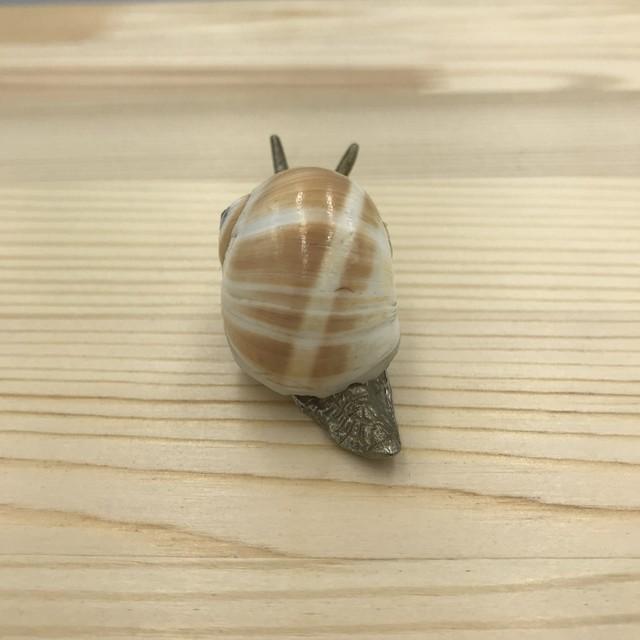 貝のかたつむり イギリスヴィンテージ 小物