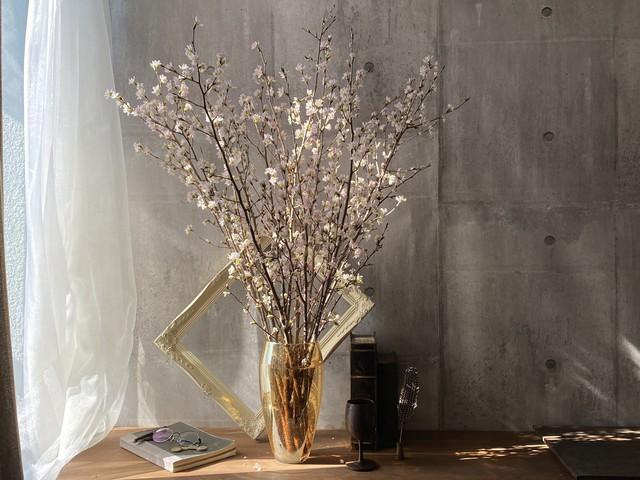 自宅で愛でる桜たち 3回プラン【季節限定 受付3月末まで】