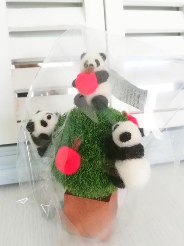 パンダのなる木[110-500]