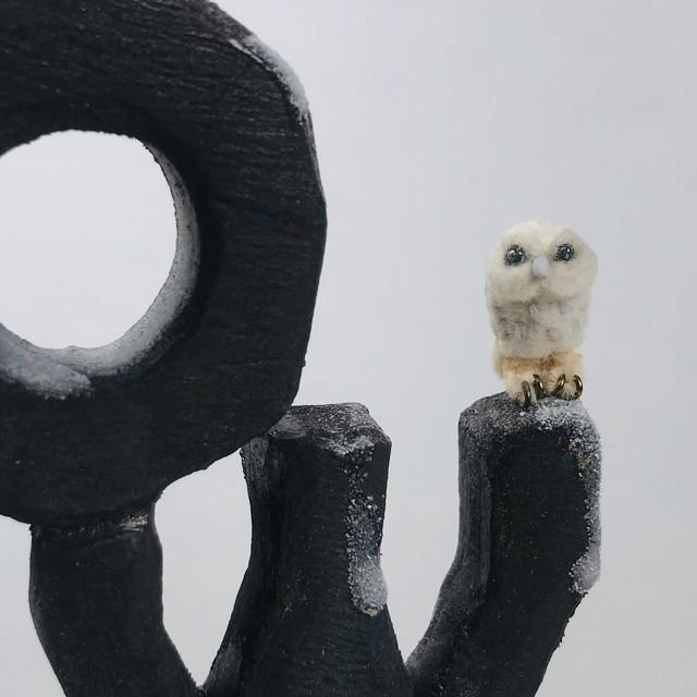 【ふくろうズ byフジタサンプル】「OWL」