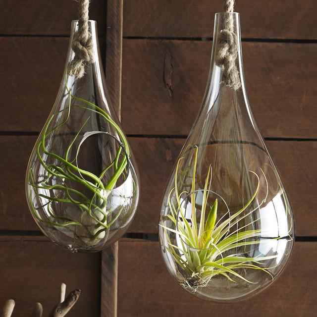2個セットRoost Recycled Glass Bubble Hanging Terrarium ハンギングバブルテラリウムS&M 2個1セット