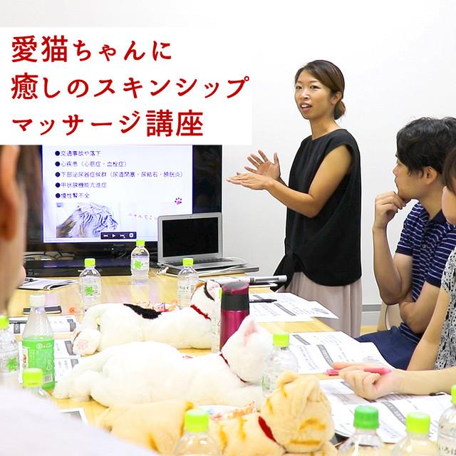 愛猫ちゃんに癒しのマッサージ講座(東京開催:12月1日(日)、1月15日(水)、3月21日(土))/ネコデミー