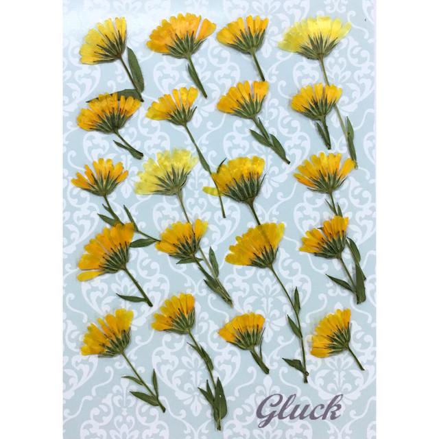 コンパクト押し花 カレンジュラ 少量をパックにしてお届け! 押し花素材