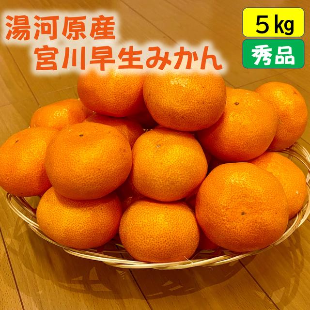 送料無料 宮川早生みかん5kg(秀品)