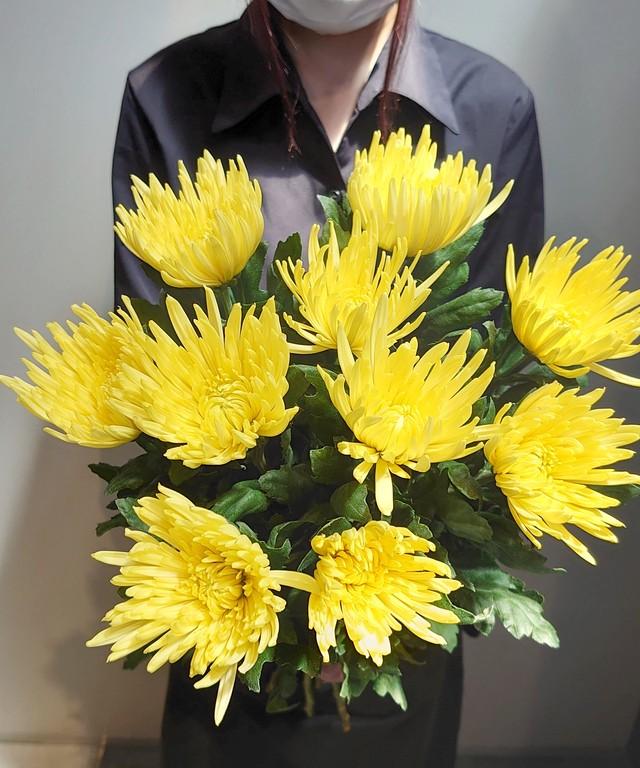 9月9日は『重陽の節句』長寿を願って 菊を飾ろう。 アナスタシアイエロー 送料無料