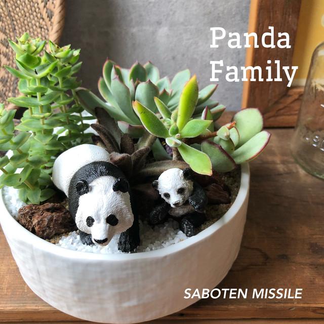 Panda Family パンダファミリー