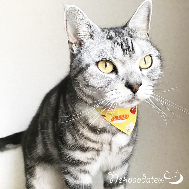 【寿司柄】猫用バンダナ風首輪/選べるセーフティバックル 猫首輪 安全首輪