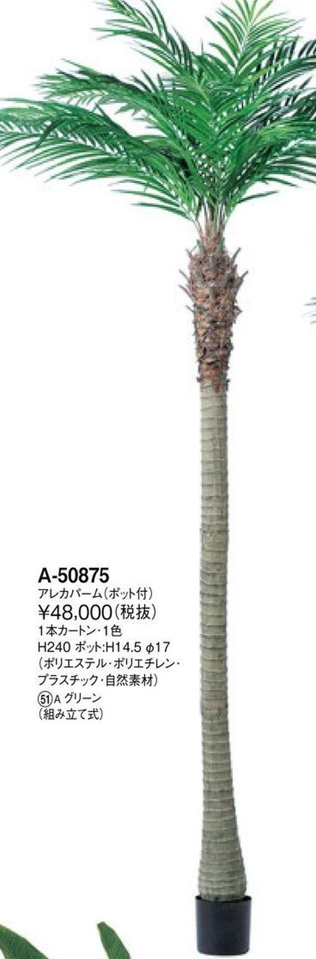 アレカパーム    花言葉「君を見守る」 高さ:240cm