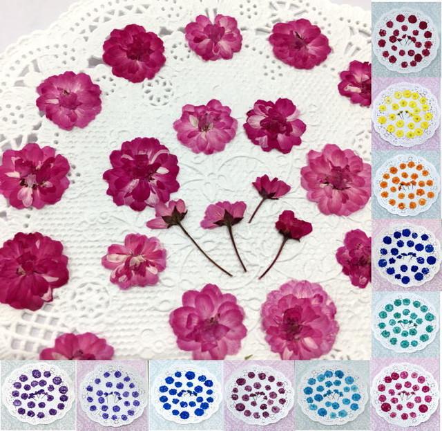 コンパクト押し花 八重こでまり(全11色) 少量をパックにしてお届け! 押し花素材