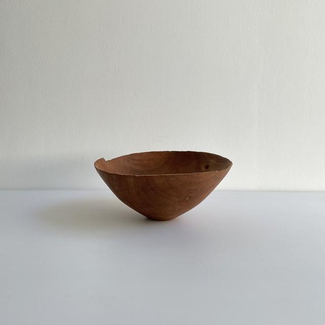 藤本健   ホルトノキ  鉢