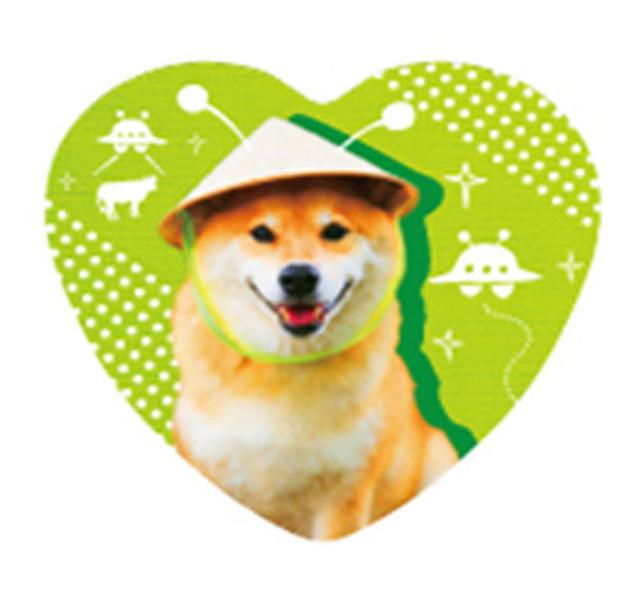 柴犬まるハート缶バッジ ー侵略まるー