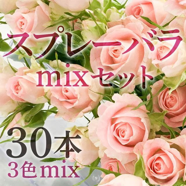 スプレーバラ 30本(3色mixセット)【可憐なスプレー咲き♡ローズ】★フラワーロス支援