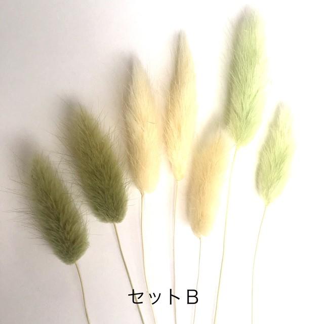 【花材・プリザーブドフラワー】ラグラス セットB