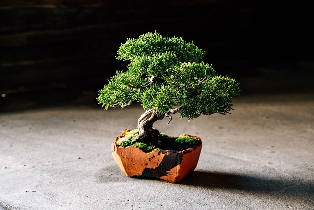 澪標-bonsai pot- / S / Persimmon