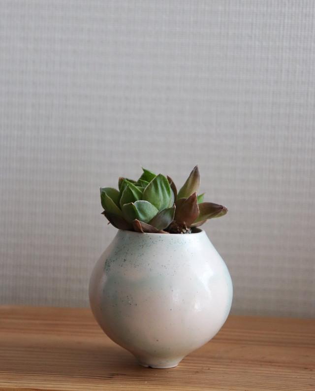 Pot. Planet S(砂漠ブルー)と植物セット