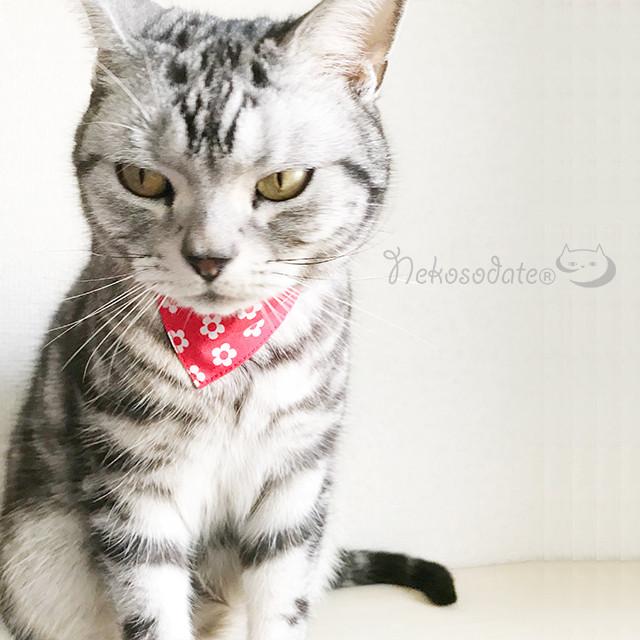 【いかにも花柄】猫用バンダナ風首輪/選べるセーフティバックル 猫首輪 安全首輪