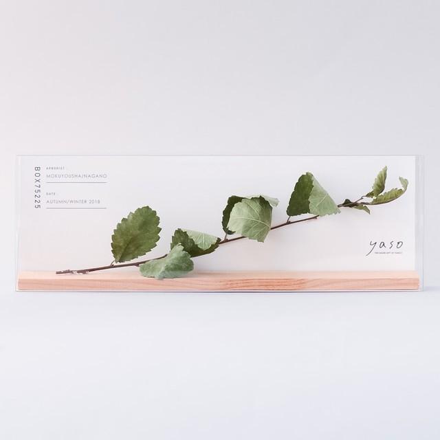 d1204_アキニレ