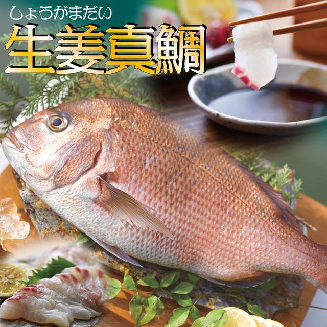 高知産の生姜を食べて育った、新鮮絶品の「生姜真鯛」一尾(鮮魚)