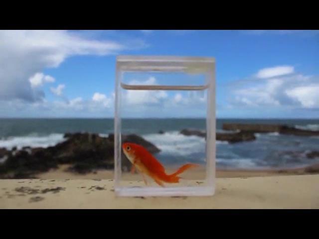 アクアリウム トランプが生きた魚が入った水槽に変化!!!