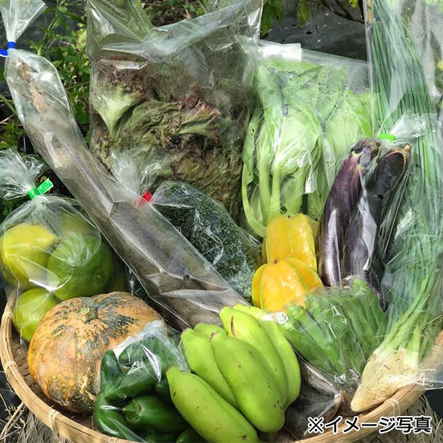 【定期便(3回)】沖縄産無農薬野菜セット(S) - メイン画像