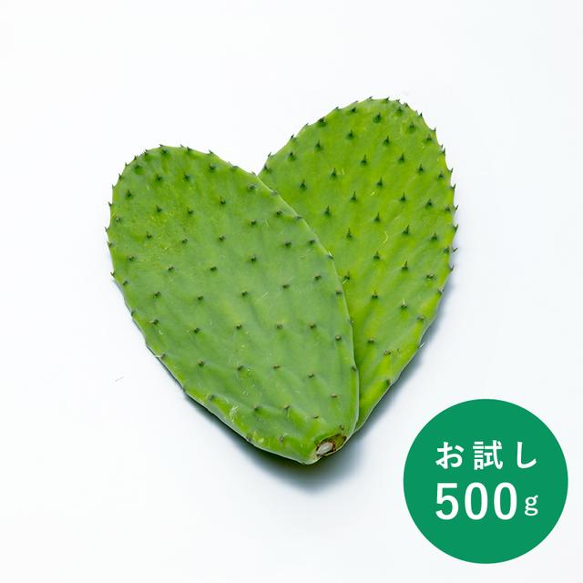 食べるサボテン 太陽の葉 フレッシュリーフ(新芽限定・お試し500g・ゆうパケット可)