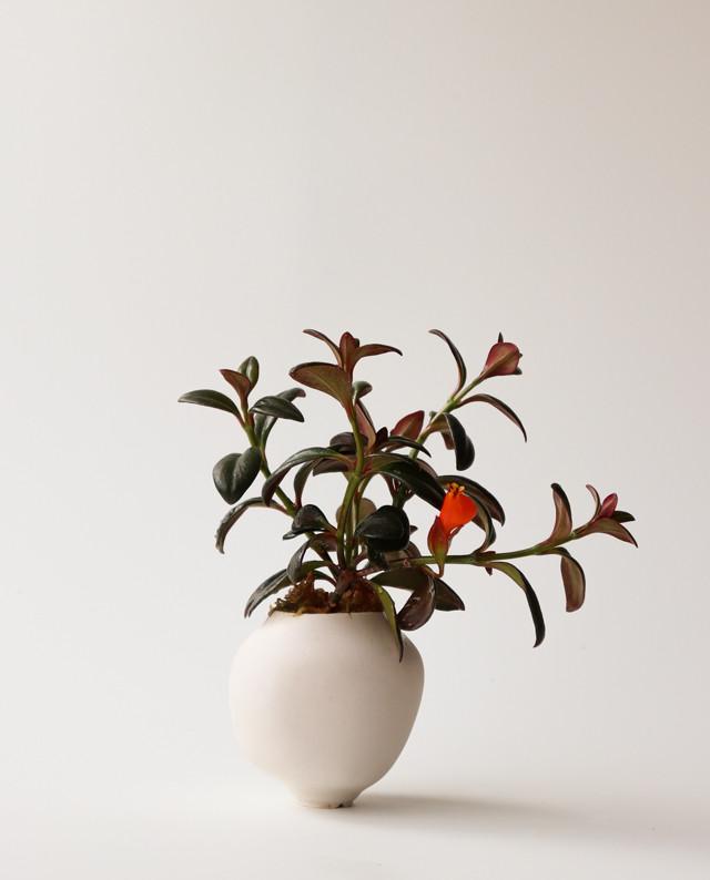 Pot. Bone と植物セット 植木鉢, 植物