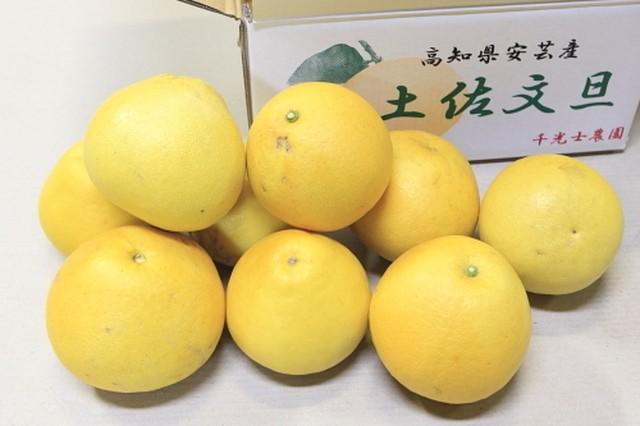 【ご家庭用】土佐文旦 小玉 Lサイズ 8kg(20~22玉) 送料込