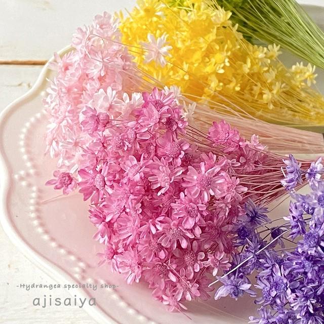 パステルの小花 <スターフラワーミニ> カラードライフラワー