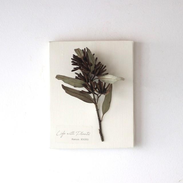 """植物キャンバスS """"ユーカリ・レマニー""""【bdfa200016】ドライフラワー"""
