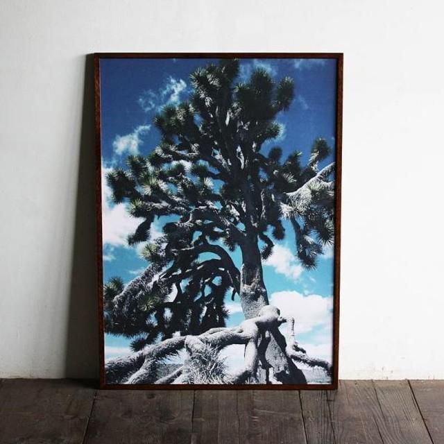 Yucca brevifolia JOSHUA TREE / B2 poster