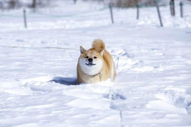 A3ノビ写真 「雪の中だってへっちゃらだよ」