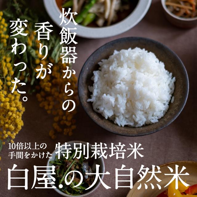 [送料無料]大自然米【3kg】精白米