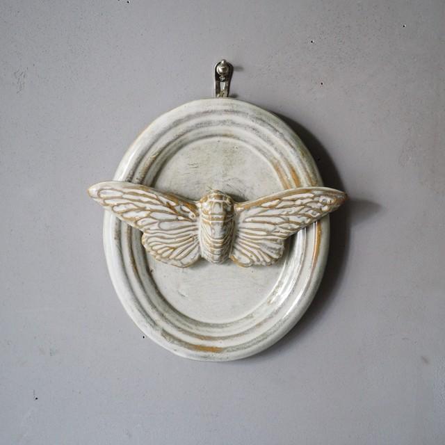 Cicada Trophy