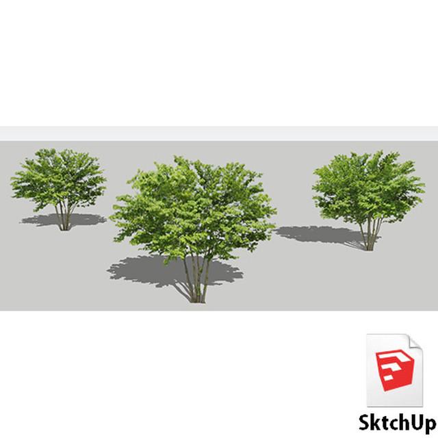 樹木SketchUp 4t_002 - メイン画像