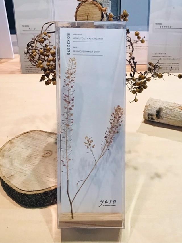 yasobox  植物見本 「ナズナ」