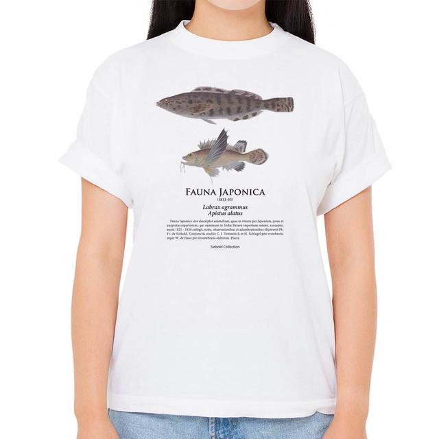 【ハチ・クジメ】シーボルトコレクション魚譜Tシャツ(高解像・昇華プリント)