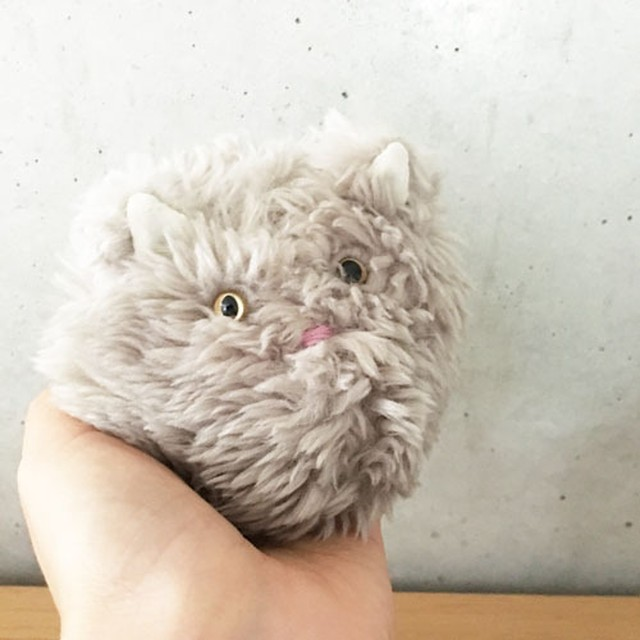 手乗り猫(モップ)