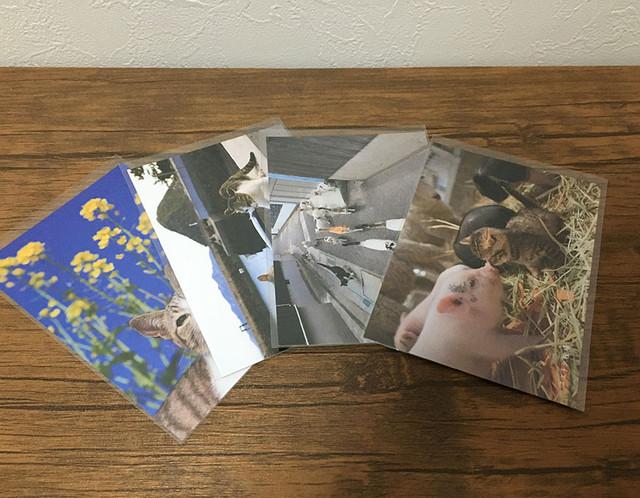 猫島や雑種猫のポストカード