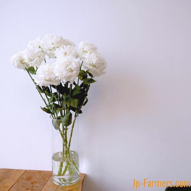 コサージュ仕立ての生みの親!フラワースピリット トルコキキョウ  大輪白色(品種おまかせ)