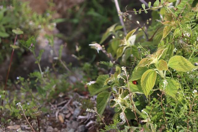 野の花写真ーてんとう虫のいる幸せな風景