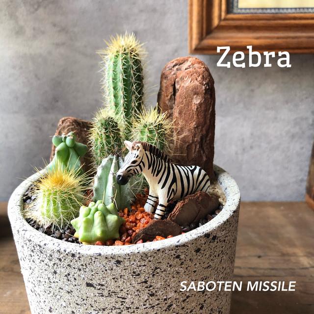 Zebra シマウマ mini