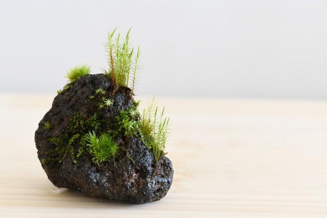 著書「部屋で楽しむ小さな苔の森」(苔テラリウム 育て方・作り方 ガイドブック)