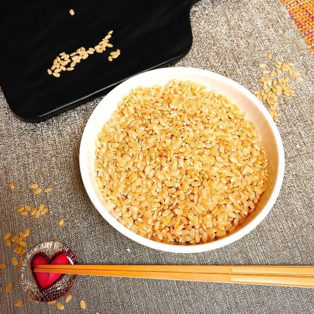【地楽】自然栽培の千葉県産天日干し玄米コシヒカリ 4kg(2kg×2) [送料無料]