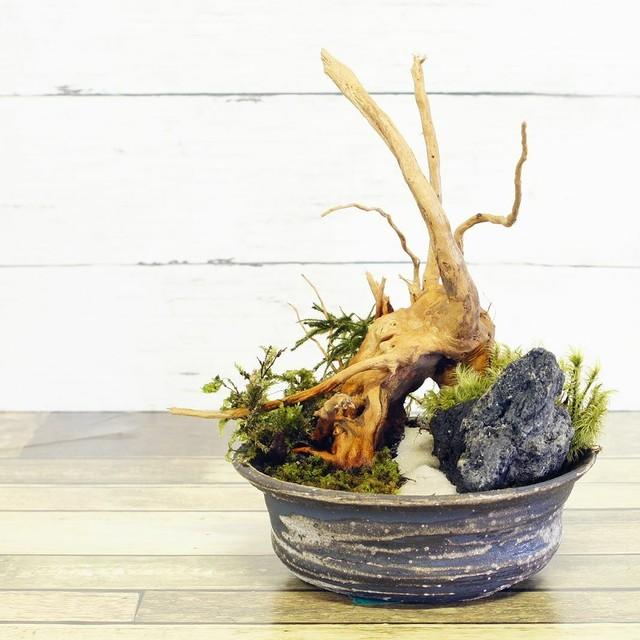 高さ 20cm 信楽焼 苔テラリウム 完成品 プレゼントにもおすすめ 現物 苔盆景 テラリウム 流木 溶岩石 新築祝い 開店祝い 引越し