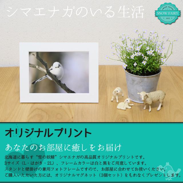 《癒やしの小鳥》シマエナガのオリジナルポストカード(12枚セット)Vol.1【送料無料】