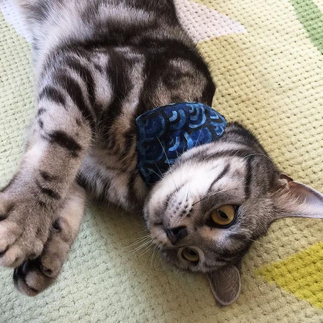 青海波柄ブルー・猫用バンダナ風首輪(角カンあり)